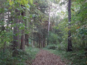ストローブマツ、ヨーロッパトウヒなど50種の樹木が育つ見本林